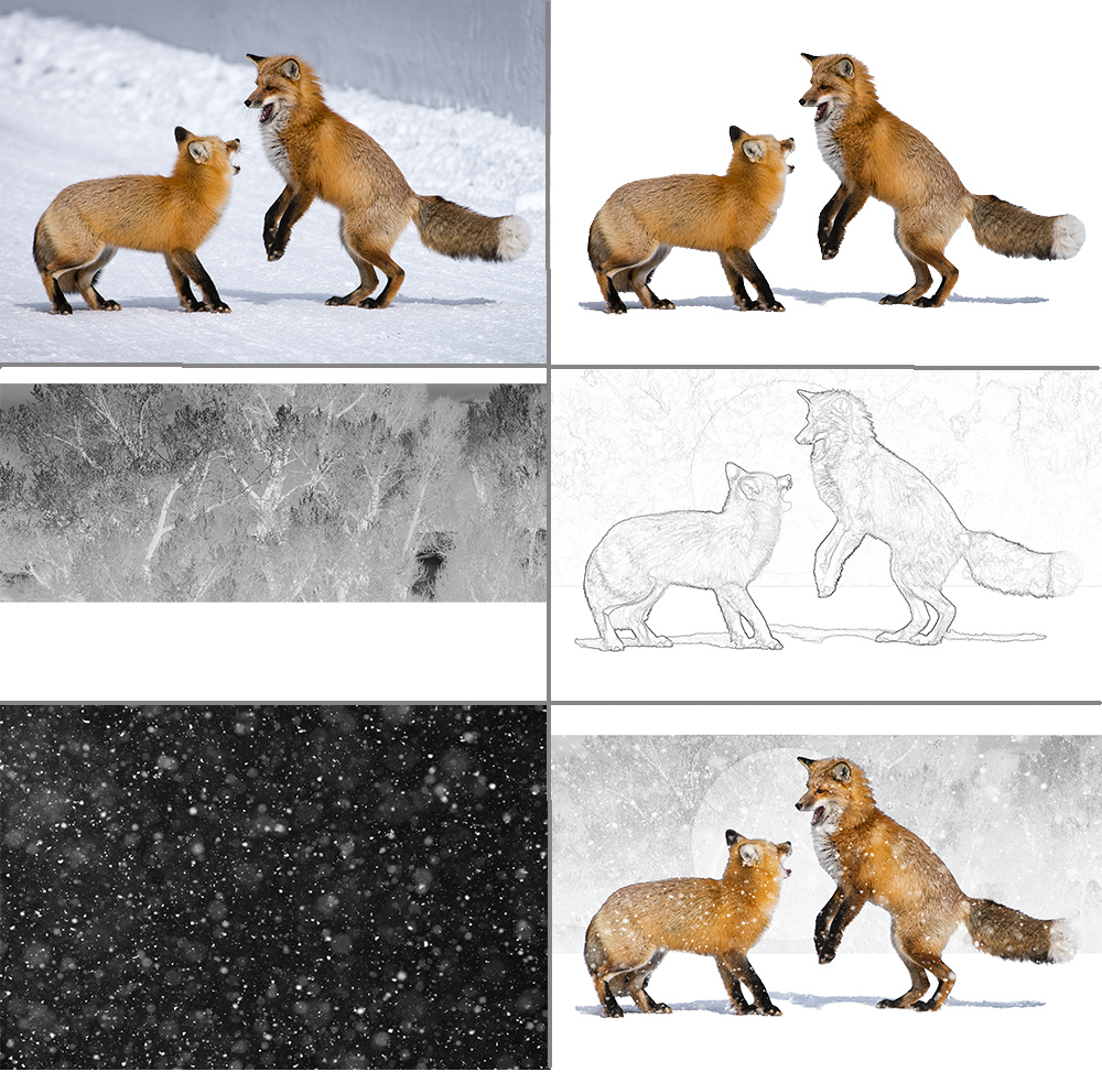 Foxes Layers
